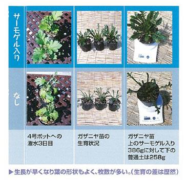 生長が早くなり葉の形状もよく、枚数が多い。(生育の差は歴然)