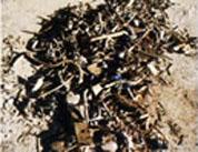 木質破砕機